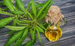 Does CBD Help Alopecia? (The Short Answer Is Yes!)
